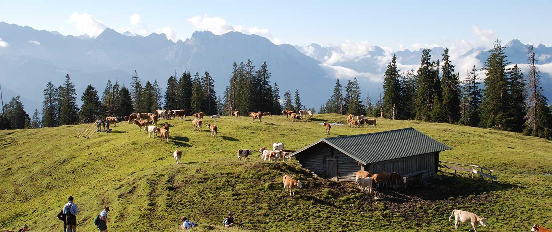 Almweide im Karwendel