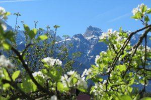 Bergfrühling im Karwendel