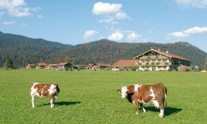 Bergbauern-Milch vom Hof