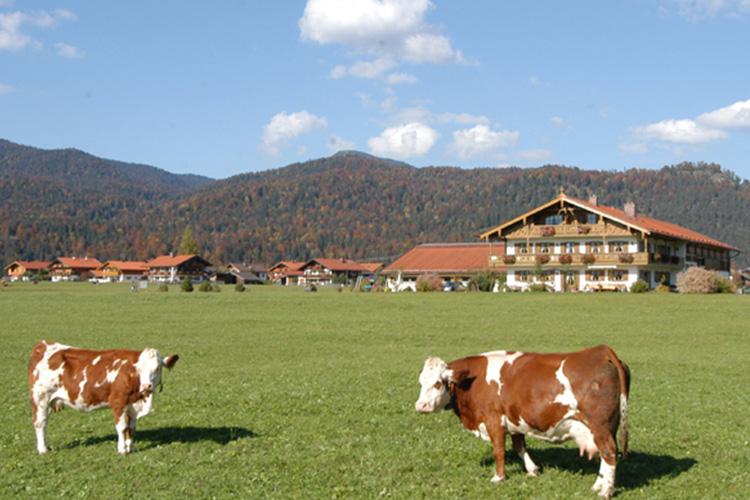 Weide für Kühe vor dem Bauernhof