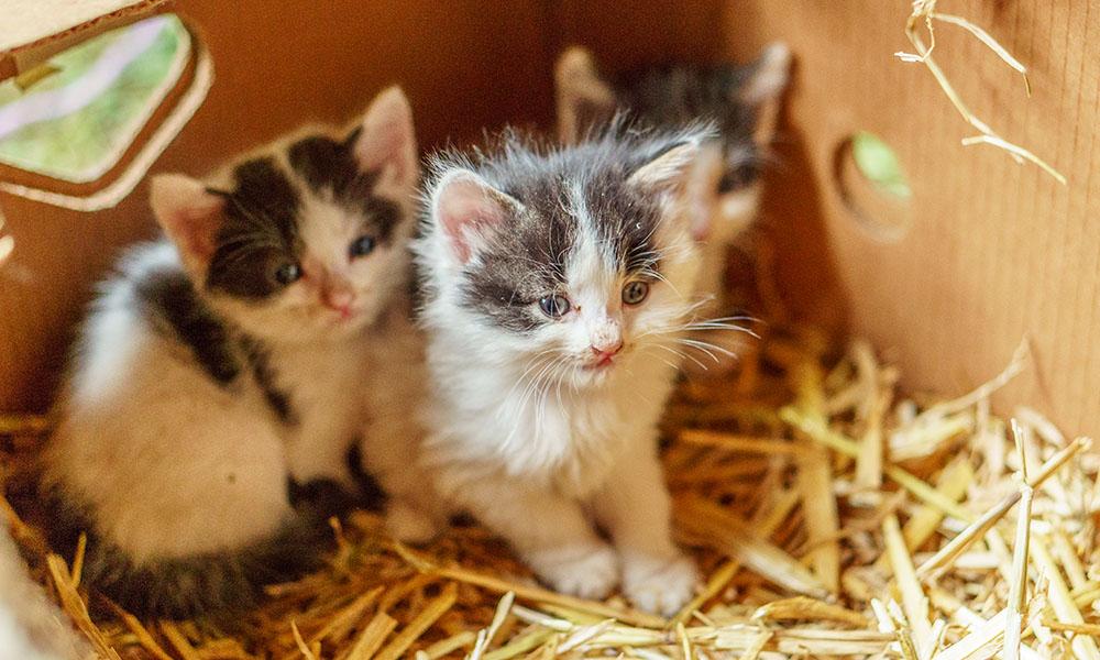 Katzenbabys kurz nach der Geburt am Hof