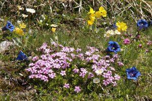 blühende Kräuter zum Bergfrühling in Krün - Ferienwohnungen